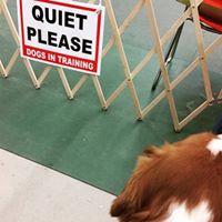 Canine Academy